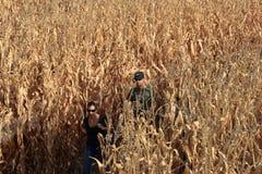 Um par que anda através do labirinto do milho no dia da queda perto de Denver, Colorado fotografia de stock