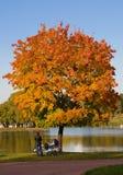 Um par sob a árvore do outono Imagem de Stock