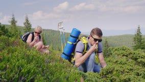 Um par turistas recolhem nas bagas das montanhas de mirtilos selvagens Modo de vida ativo, plantas selvagens vídeos de arquivo