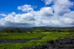 Um paraíso tropical Imagens de Stock