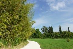Um parque bonito da cidade com os arvoredos do bambu-folha-portador do lat azul esverdeado Viridiglaucescens do Phyllostachys Fotografia de Stock Royalty Free