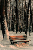 Um parque coberto com a neve Imagem de Stock Royalty Free