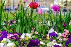 Um parque com flores fotografia de stock