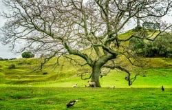 Um parque do monte da árvore Fotografia de Stock