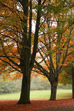 Um parque no outono Imagens de Stock Royalty Free