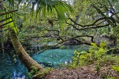 Um passadiço de madeira arqueado sobre as associações azuis e esmeraldas s FL, EUA fotos de stock royalty free