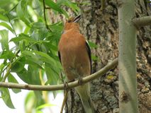 Um passarinho empoleirado em um ramo com arbustos e flores no fundo fotos de stock royalty free