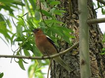 Um passarinho empoleirado em um ramo com arbustos e flores no fundo fotografia de stock