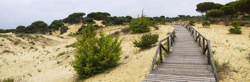 Um passeio à beira mar de madeira de enrolamento através das dunas perto de Matalascanas, província Huelva fotografia de stock