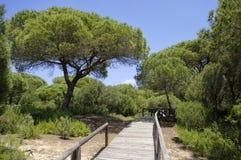 Um passeio ? beira mar de madeira atrav?s das dunas que conduzem ? praia do EL Portil, Huelva, a Andaluzia, Espanha imagem de stock