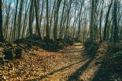 Um passeio completamente das folhas caídas foto de stock royalty free