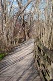 Um passeio de madeira nas madeiras na primavera Fotografia de Stock Royalty Free