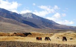Um pasto escondido em tibet Fotos de Stock Royalty Free