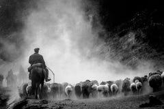 Um pastor chinês e seus carneiros na estrada do trânsito em Xinjiang Fotografia de Stock Royalty Free