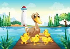 Um pato da mãe com os quatro patos do bebê na ponte de madeira Foto de Stock