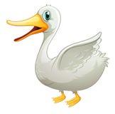 Um pato gordo branco Imagens de Stock