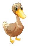 Um pato marrom do bebê Imagem de Stock