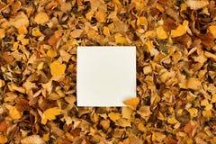 Um pedaço de papel quadrado nas folhas de outono amarelas murchos foto de stock royalty free