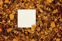 Um pedaço de papel quadrado nas folhas de outono amarelas murchos imagem de stock
