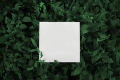 Um pedaço de papel quadrado nas folhas verdes fotografia de stock