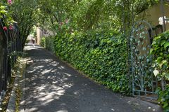 Um pedestre anda através da luz do sol dappled no trajeto da interrupção em Berkeley, CA imagem de stock