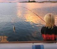 Um peixe Fotografia de Stock Royalty Free