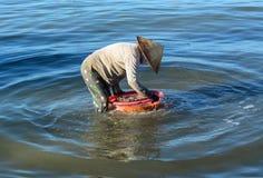 Um peixe da limpeza da mulher no mar na came Ranh late, Vietname imagem de stock