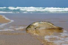 Um peixe e um mar Foto de Stock