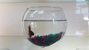 Um peixe em um pershop Imagens de Stock