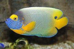 Um peixe vibrante Imagens de Stock