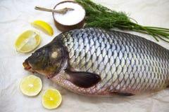 Um peixe vivo da grande carpa fresca que encontra-se na no fundo de papel com uma faca e fatias de limão e com aneto de sal Imagens de Stock