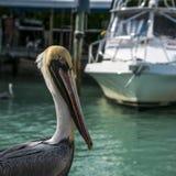 Um pelicano que está transversalmente de um navio nas chaves de Florida Fotos de Stock Royalty Free