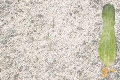 Um pepino com as flores isoladas no fundo branco Imagem de Stock Royalty Free