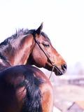 Um Pferd Lizenzfreie Stockfotos