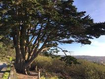 Um pinho solitário, o pinus, e o trajeto dobrar-se-ão para a árvore, 1 imagens de stock