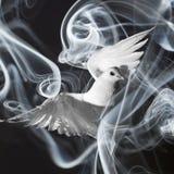 Um pombo branco imagem de stock royalty free