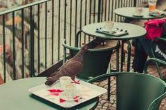 Um pombo em uma tabela imagem de stock