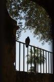 Um pombo que descansa em uma grade em Córdova, Espanha, Europa fotos de stock royalty free
