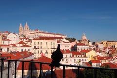 Um pombo só em Medival Lisboa fotos de stock