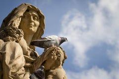 Um pombo saudável enorme que senta-se no monumento e no wa velhos da história Foto de Stock Royalty Free