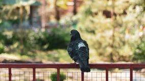 Um pombo triste s? no parque senta-se em uma vara do ferro imagens de stock royalty free