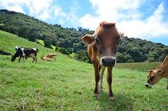 Um ponto de vista do cão da exploração agrícola Fotografia de Stock