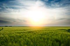 Um por do sol sobre um campo Fotografia de Stock