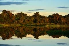 Um por do sol surpreendente no parque de Yasuni, Equador foto de stock royalty free