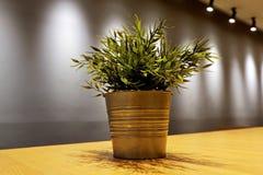 Um potenciômetro de flor na tabela de madeira fotografia de stock royalty free