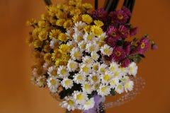 Um potenciômetro de flores coloridas fotos de stock royalty free