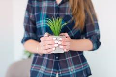Um potenciômetro com a planta carnuda nas mãos fêmeas foto de stock
