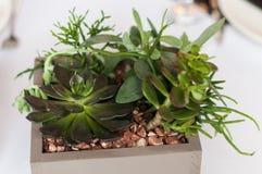 Um potenciômetro com plantas carnudas em uma tabela de banquete fotos de stock royalty free