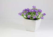 Um potenciômetro de flor Imagem de Stock
