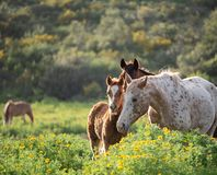 Um potro e sua mãe em um prado verde imagens de stock royalty free